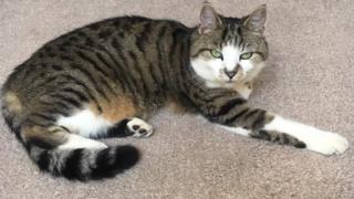Tortoise-shell cat Tigger