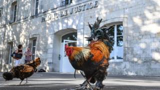 Deux coqs devant le Tribunal de Grande Instance de Rochefort, dans l'ouest de la France, où la justice doit se prononcer le cas de Maurice le coq.