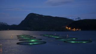 SeaCages by night