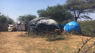 Dahoo Oromoonni Boranaa baqachuun keessa jiraatan