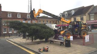 Rochford Christmas tree