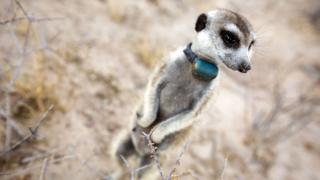 Still from Animals With Cameras
