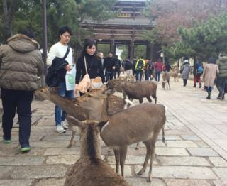 Deer and tourists in Nara