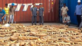 Cambodian Customs and Excise Officials looking at ivory seized from a shipping container at the Phnom Penh port