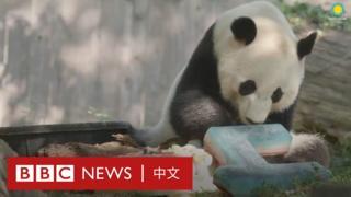 大熊猫贝贝