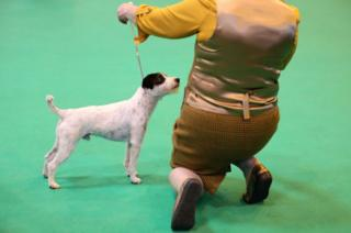 Dogs and owners arrive for the first day of Crufts Dog Show at NEC Arena on 9 March 2017 in Birmingham, England.