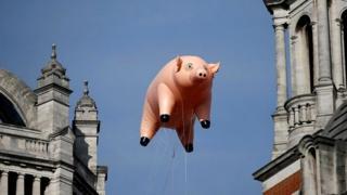 विरोध का प्रतीक सुअर