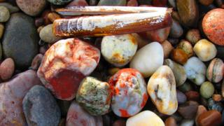 Pebbles and a razor clam