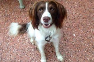 Missing dog Nancy