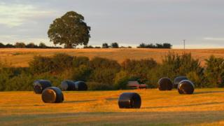 Hay bales in a field outside Oxford