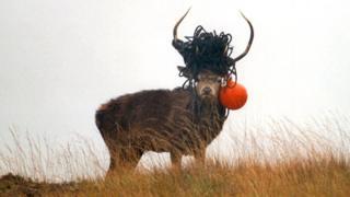 Ciervo rojo
