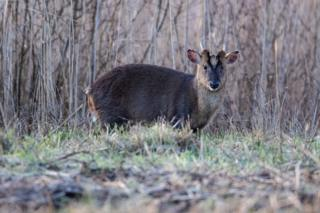 A deer spotted at RSPB Otmoor
