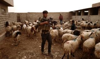 Иракские военные ищут позиции боевиков ИГ. (1 ноября 2016)