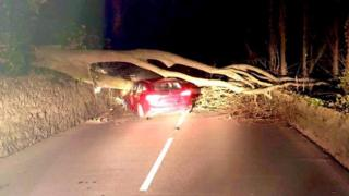 Paul Mee's car damaged by a fallen tree on Anglesey