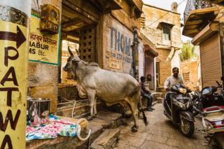 A sacred cow in a street in India