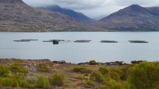 Tuathanas-èisg ann an Loch Thoirbheartain