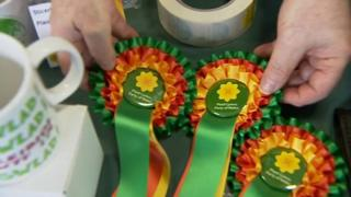 Plaid Cymru rosettes on display at its 2017 Spring conference