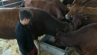 Richard Copley with his cows