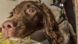 Sniffer dogs helped detect the illegal tobacco