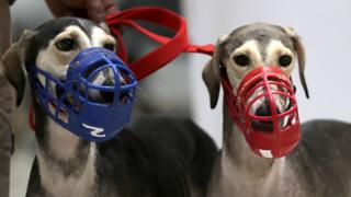 File image of muzzled dogs