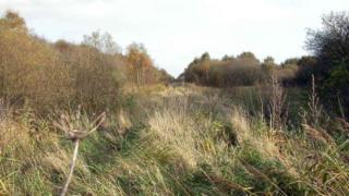 Misson Carr nature reserve