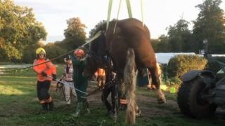 Horse being rescued