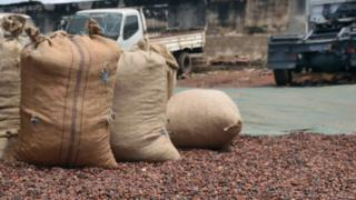 Cameroon na fifth biggest cocoa producer for di world