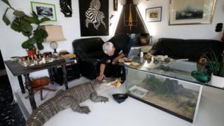 ပြင်သစ်နိုင်ငံ Nantes မြို့မှာ နေထိုင်တဲ့ အသက် ၆၇ နှစ် Philippe Gilletဟာ တွားသွား သတ္တဝါ ၄၀ဝ ကျော်ကို သူရဲ့ နေအိမ်မှာ မွေးထားပါတယ်။ ဒီအထဲမှာ ယဉ်ပါးနေတဲ့ Aliလို့ နာမည်ပေးထားတဲ့ မိကျောင်းကို မစ္စတာ Gilletက ဧည့်ခန်းထဲမှာ အစာကျွေးနေတာ ဖြစ်ပါတယ်။