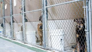 Dog kennels (generic)