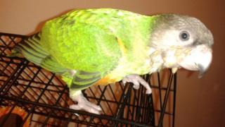 Jessie the parrot