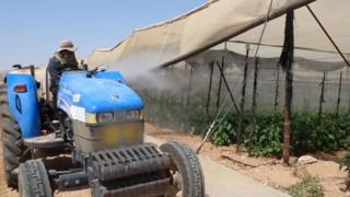 แรงงานไทยในอิสราเอล