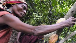 Female cocoa worker in the Ivory Coast