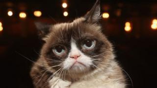 Huyền thoại mèo nhăn nhó 'Grumpy Cat'