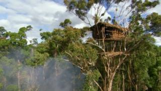 A treehouse in West Papua
