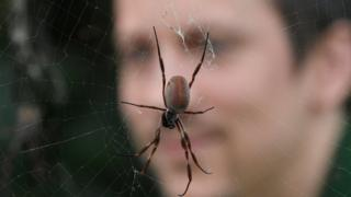 Zookeeper Jamie Mitchell views an Orb Spider during an event to publicise the annual stocktake at London Zoo in London