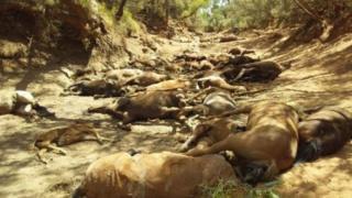 Penjaga kawasan Outback menemukan puluhan kuda mati di Northern Territory, Australia