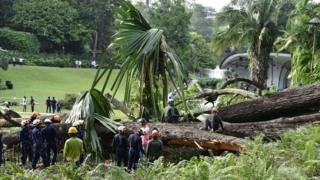 Emergency workers at the scene of a tree collapse accident at Singapore Botanic Gardens