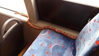 بس پر سانپ