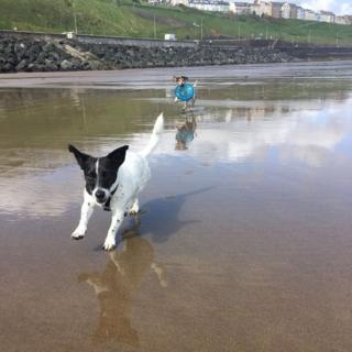 Two Jack Russell Terriers running through water