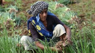 ભારતનો ખેડૂત