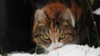 Kitty Afra in the snow
