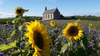 Sunflowers and church