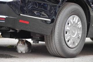 "Larry the Downing Street cat under Mr Trump's armoured Cadillac, known as the ""Beast""."