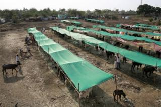 A government-run cattle camp is seen outside a village in Osmanabad, India, April 15, 2016.