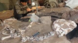 Найденные останки динозавра