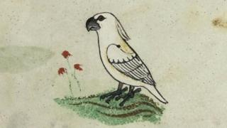 One of the four images of the cockatoo in the 13th Century manuscript