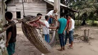 प्राणी, इंडोनेशिया