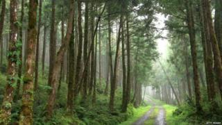 जापान के पेड़