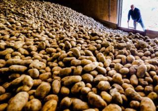 in_pictures Potato farmer
