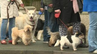 Dogs and owners lined up in Stornoway